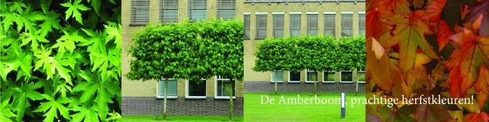 Leiboom Amberboom - Leibomen (Liquidambar).jpg