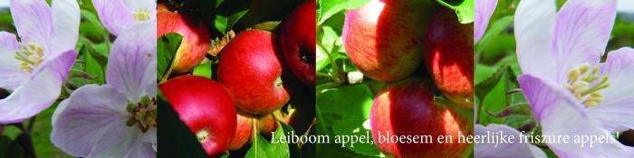 Leiboom appel (Malus domestica Elstar).jpg